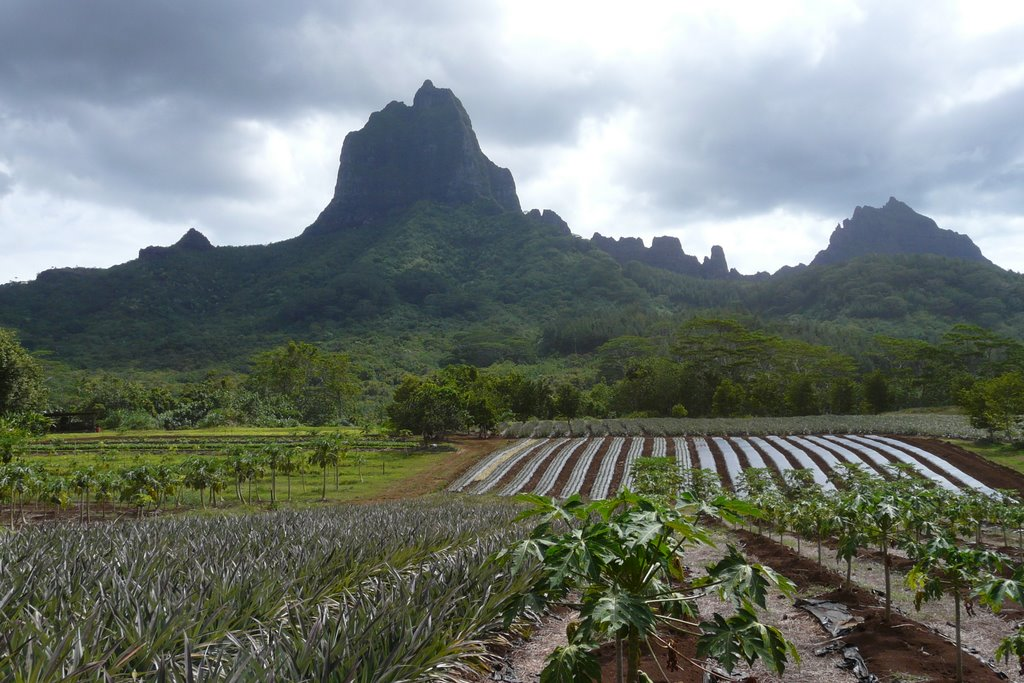plantations on moorea