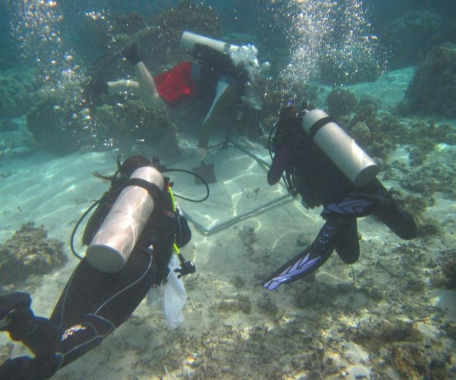 field work in the Moorea lagoon